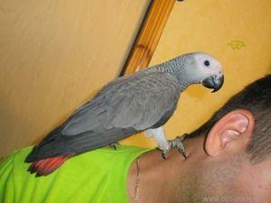 Jak udržet papoušek horký