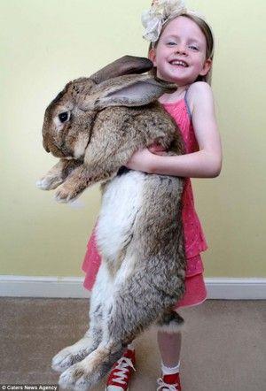 Plemeno králíka