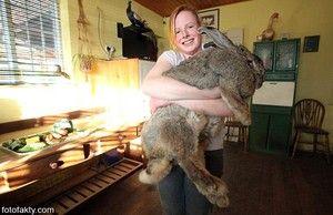 Které plemeny králíků jsou lepší pro chov?