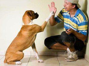 Správný výcvik psů doma