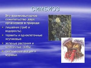 Příklady a popis symbiózy u volně žijících živočichů