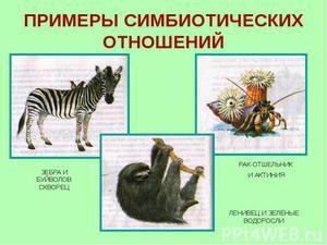 Příklady symbiózy