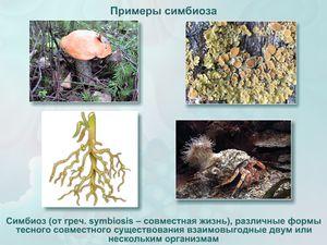 Symbióza v přírodě