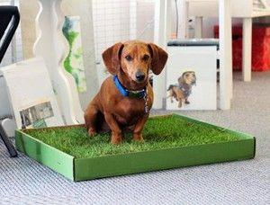 Vycvičujeme psy do podnosu v podmínkách bytu