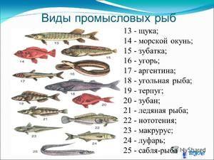 Hodnota komerčních ryb