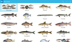 Komerční ryby