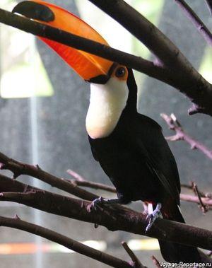 Který pták má červený zobák