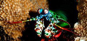 Pohled na rakovinu mantis