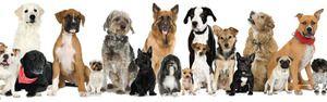Rozmanitost plemen psů: jména, fotky, tipy