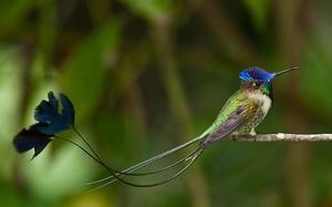 Vzácné ptáky - nádherné Spatelite