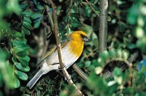 Vzácné ptáky, žhavé