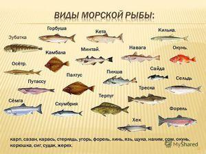 Růžový losos je dravá ryba.
