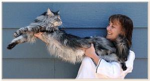 Skvělá domácí kočka