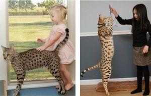 Asher a děti - růst koček