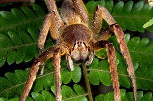 Největší a nejnebezpečnější pavouci na světě
