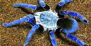 Velké a nebezpečné pavouci