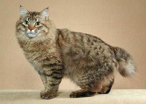 Největší kočky na světě a jejich historie
