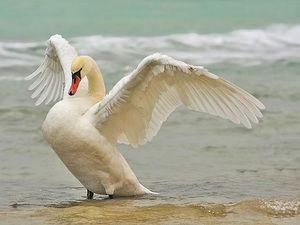 Popis největších a nejkrásnějších ptáků