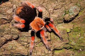 Poison v pavouku