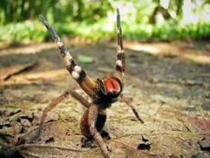 Důsledky kousnutí jedovatého pavouka