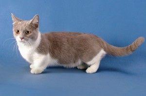Popis malé kočky