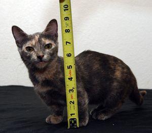 Které kočky jsou nejmenší