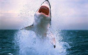 Nejnebezpečnější žraloci na světě. Deset nejnebezpečnějších žraloků