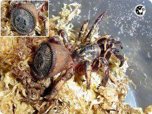 Recenze nejnebezpečnějších pavouků
