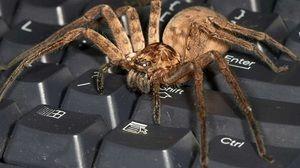 Největší pavouci