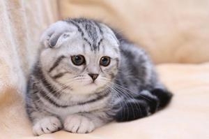 Povaha skládaných koček