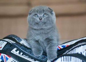 Učte kotě do zásobníku
