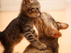 Buďte pozorní a přátelští svým mazlíčkům během této obtížné doby