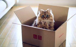 Co dělat, když kočka odmítá jíst
