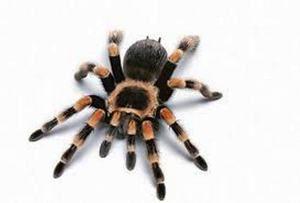 Struktura pavouka a počet nohou