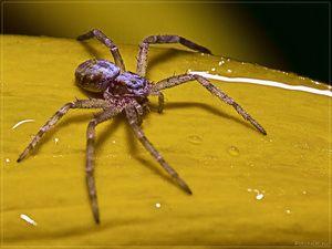 Proč má pavouk až 8 tlap