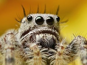 Proč hmyz má 6 nohou a pavouci mají 8 stop