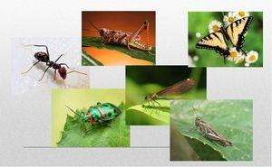 Kolik noh má hmyz?