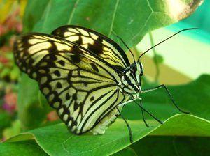 Kolik má motýli nohy. Počet nohou