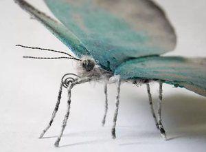 Variant motýla