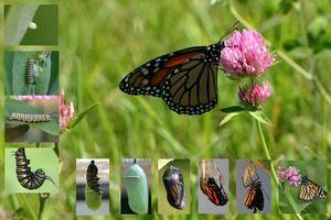 Kolik motýlů žije: životnost všech cyklů