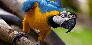 Očekávaná délka života papouška
