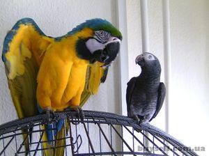 Jak se starat o velké papoušky