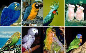 Péče o malé papoušky