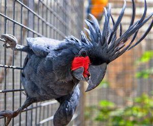 Kolik let žijí papoušci