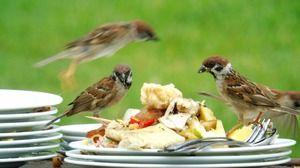 Popis ptáka vrabce