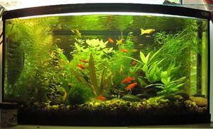 Obsah kolíků ve společném akváriu