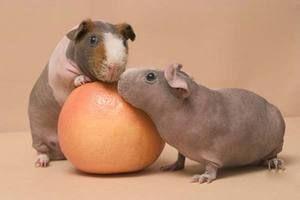 Dvě prasata z kůže