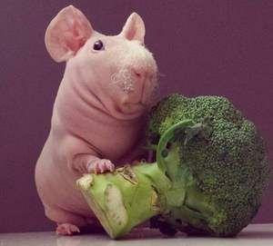 Brokolice a hubená