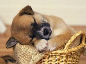 Malé štěně ve snu, které předvede?