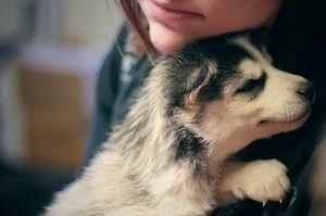 Objímání štěně ve snu